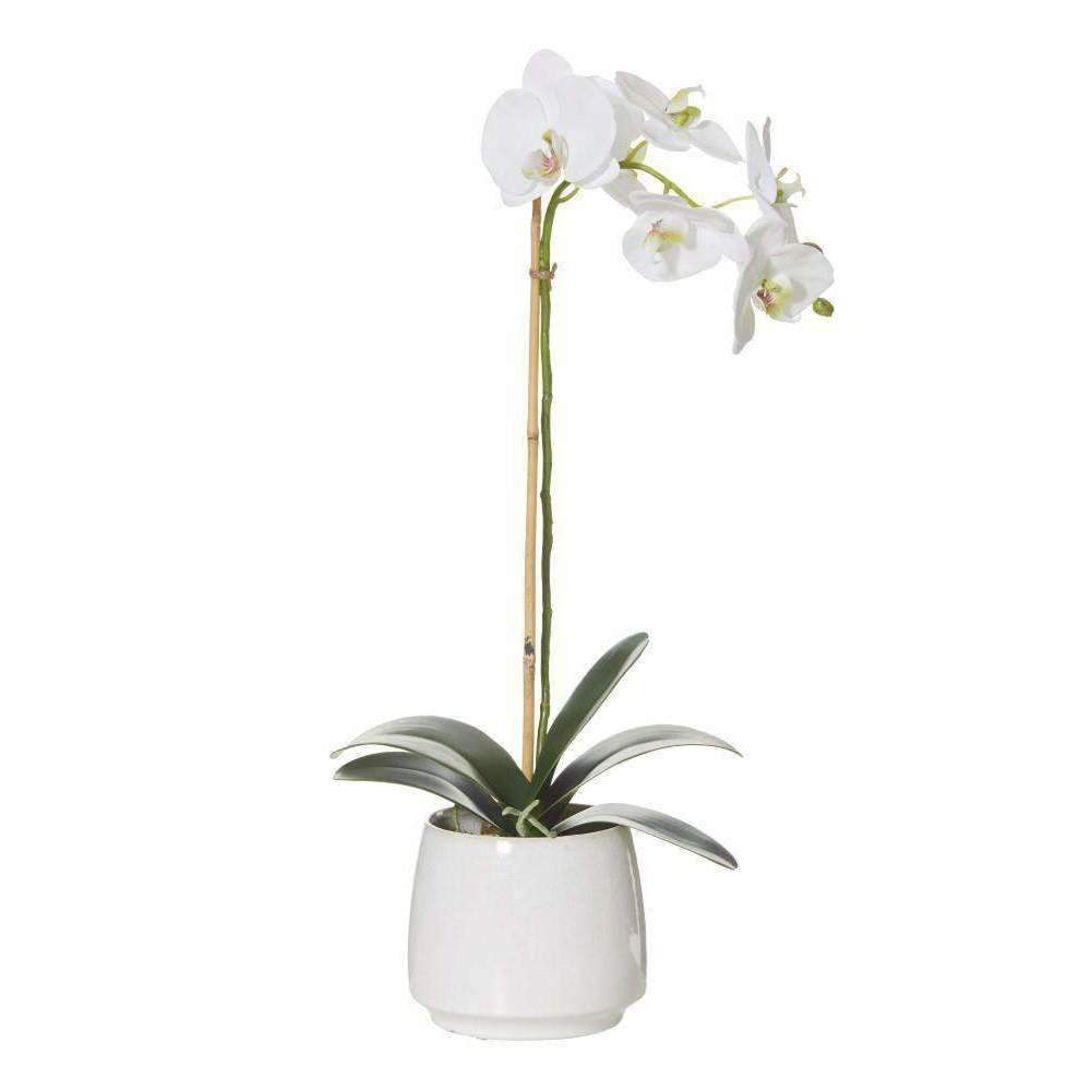 Deluxe Phalaenopsis in Gianna Pot | Faux Flowers and Plants | The Design Store NZ