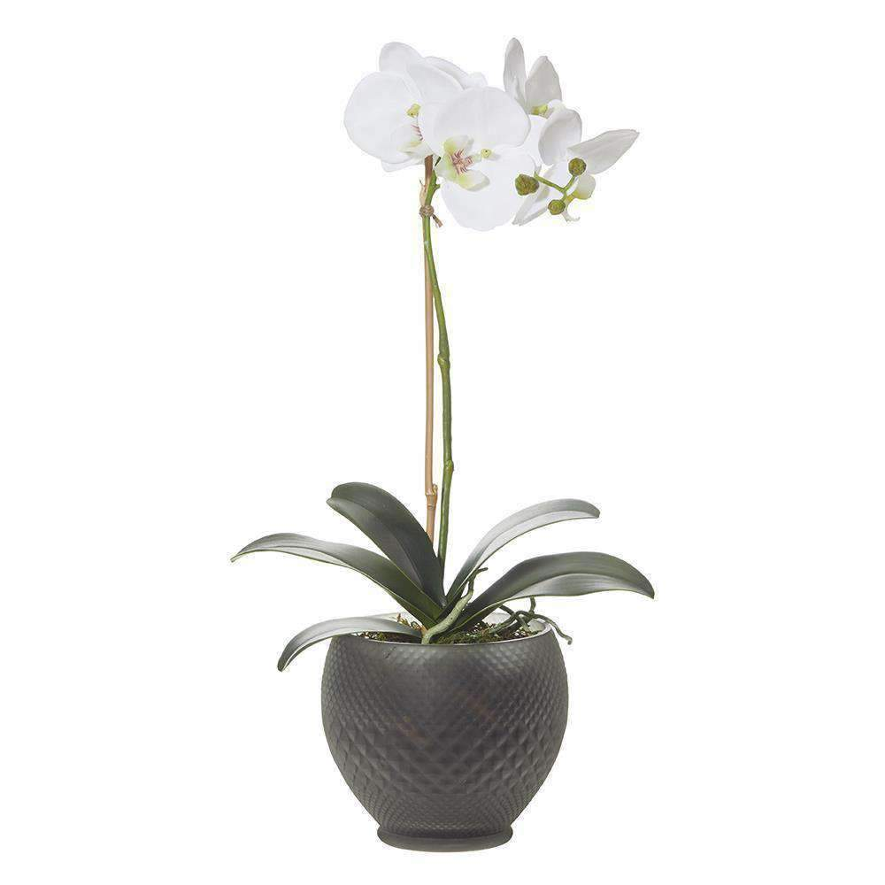 Deluxe Phalaenopsis-Gabriella Bowl | Faux Flowers and Plants | The Design Store NZ