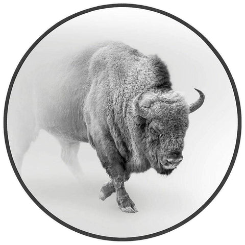 Round Art Bison In The Mist | Wall Art | The Design Store NZ