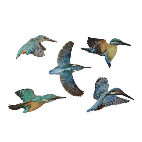 Wall Art Kingfisher Birds | Wall Art | The Design Store NZ