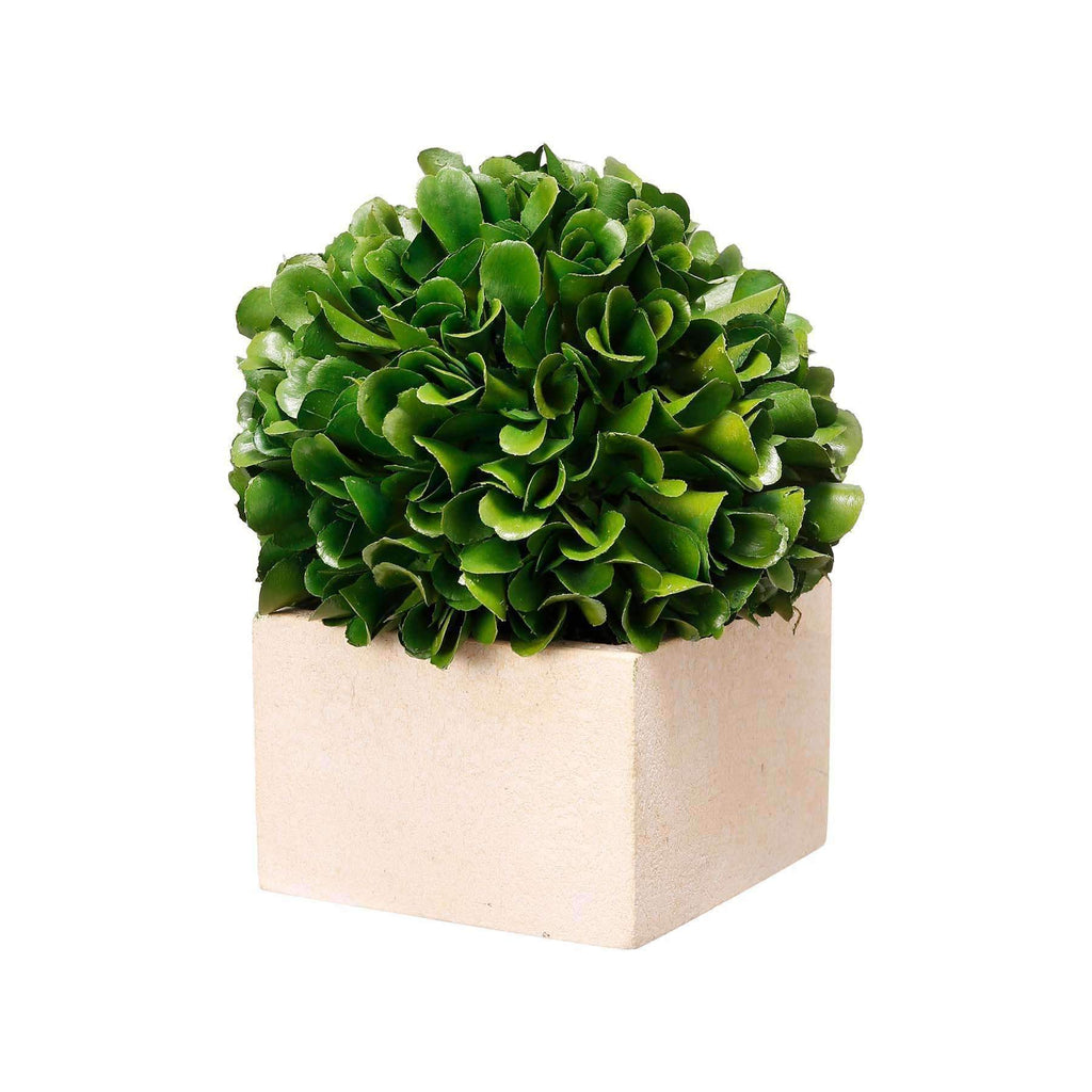 Boxed Topiary Boxwood | Faux Flowers and Plants | The Design Store NZ