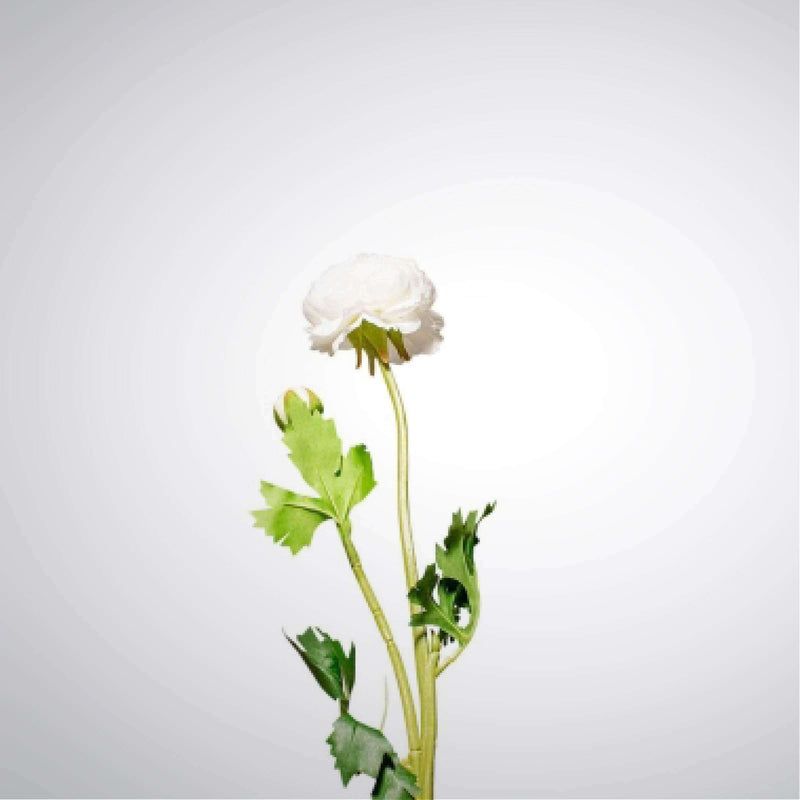 Graceful Ranunculus - Cream | Faux Flowers and Plants | The Design Store NZ