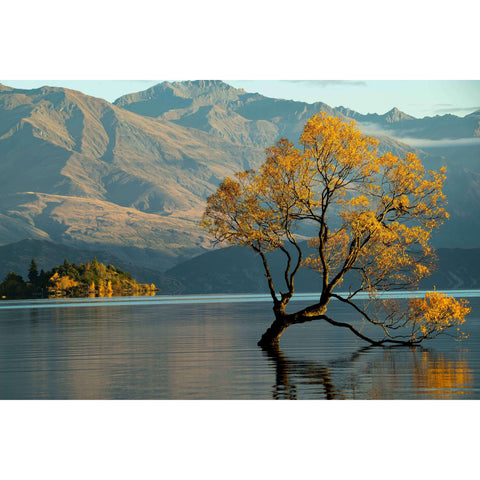 Glass Art Wanaka Lake Tree | Wall Art | The Design Store NZ
