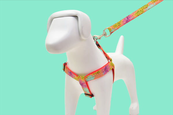 Amazonian Sunset Harness + Leash Included