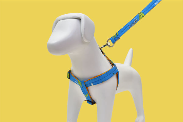 Wild Banana Harness + Leash Included