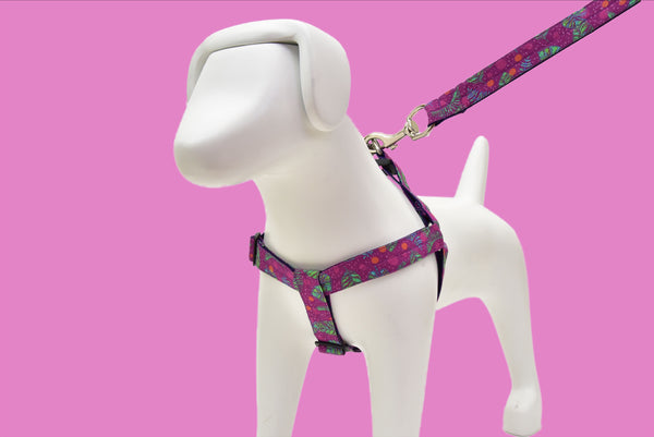 Aurora Harness + Leash Included