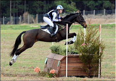 Wildcats of the University of Kentucky Take on the Intercollegiate Eventing Championships
