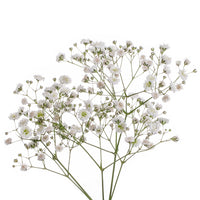Baby's Breath, a bushy flower great for wedding bouquets. Order yours at Bills today!