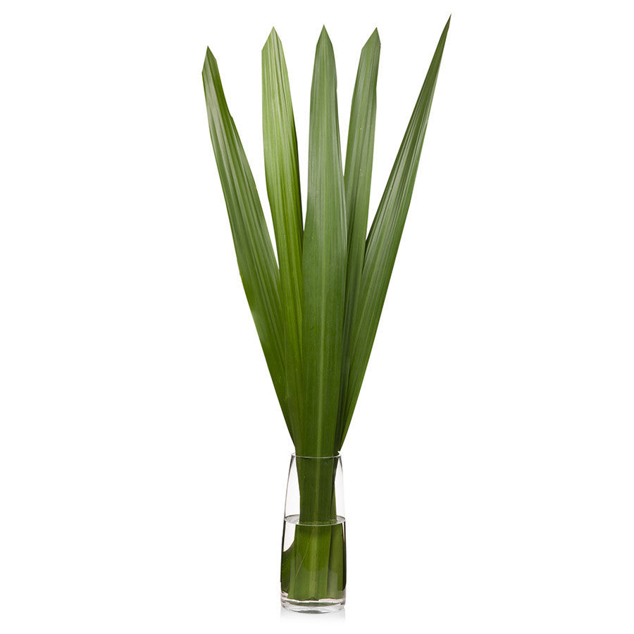 Gymea leaves, make impressive flower arrangements for your home, office or event. Buy from Bills today.