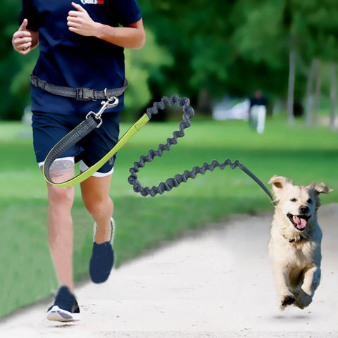 4 Colors Pet Dogs Leash Running Elasticity