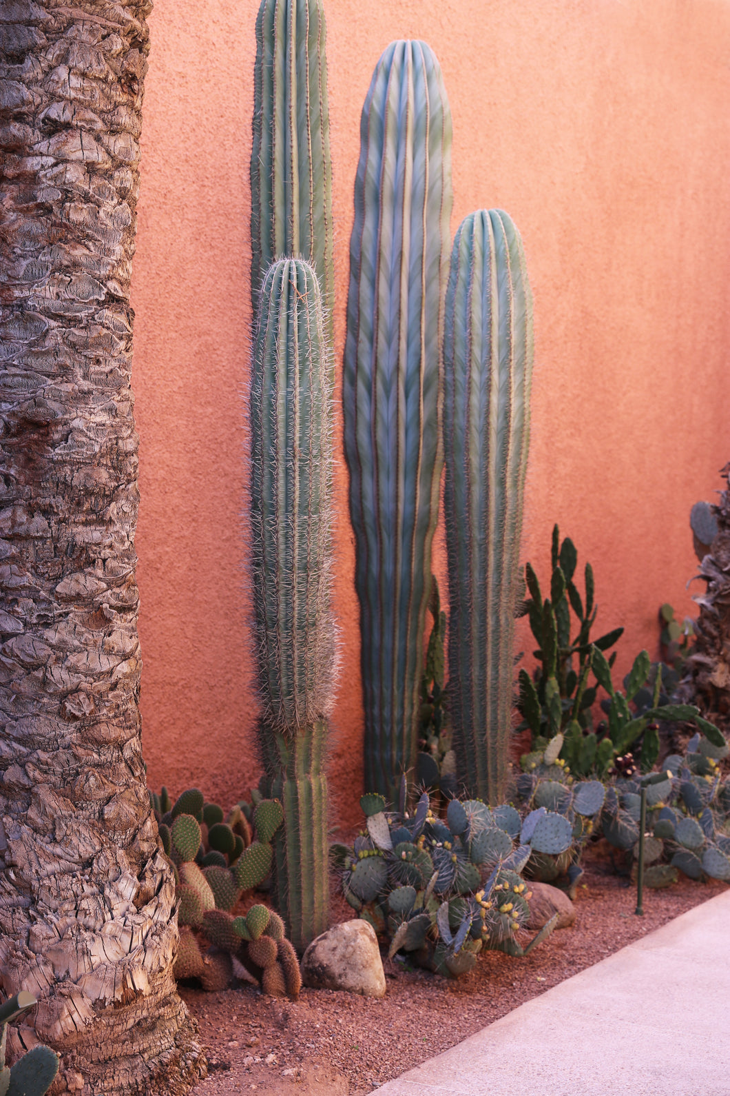 Cactus by Mary-Ellen Hinton
