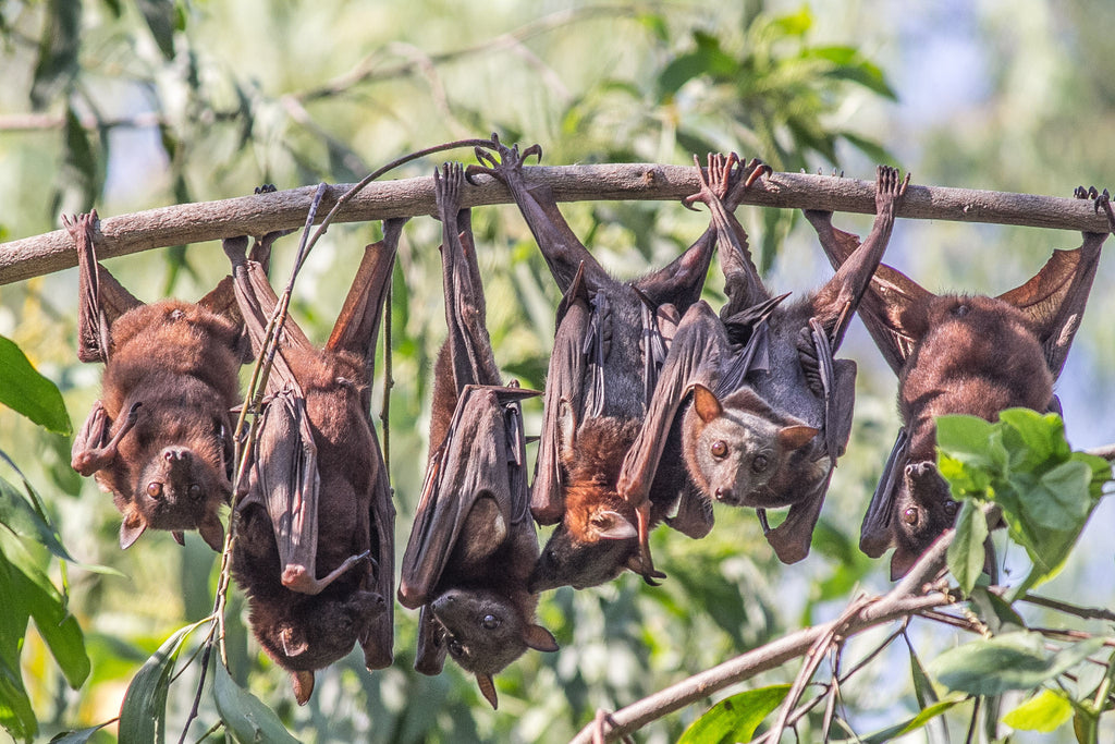 some bats hanging from trees