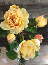 Fresh cut flowers - Gold, Ochre, Yellow
