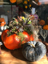 Holiday decorating with pumpkins and succulents