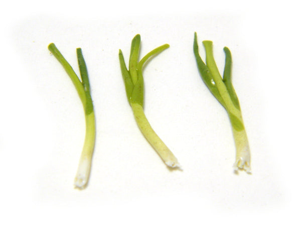 Miniature Green Onions
