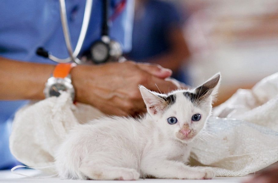 10 Ways to Reduce Stress for Your Cat When Visiting the Vet