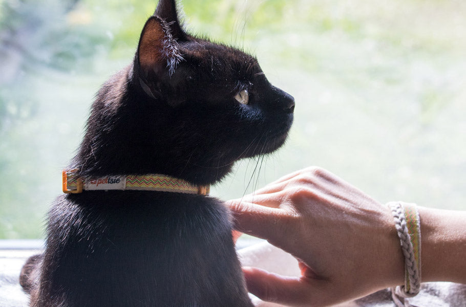 11 fascinating facts you need to know about black cats