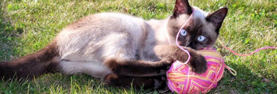 11 Amazing and Fun Cat Toys Around Your House