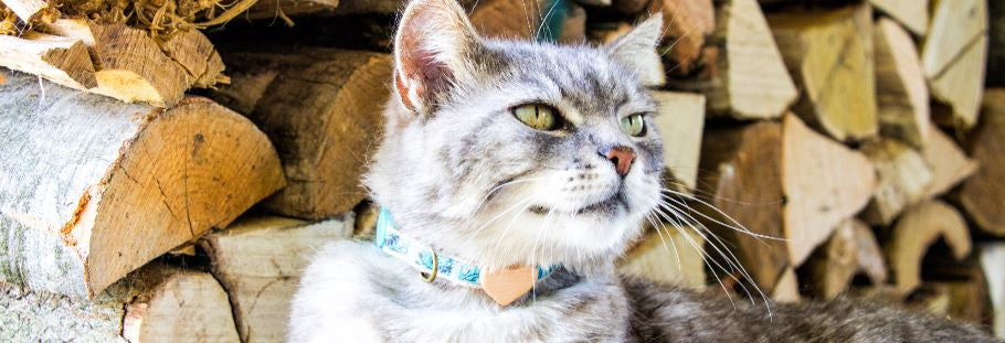 Stylish and unique Pettsie collars are a MUST for your cat