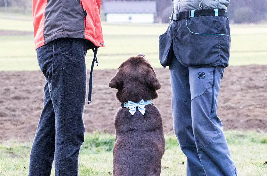 Essential apps for first-time dog owners