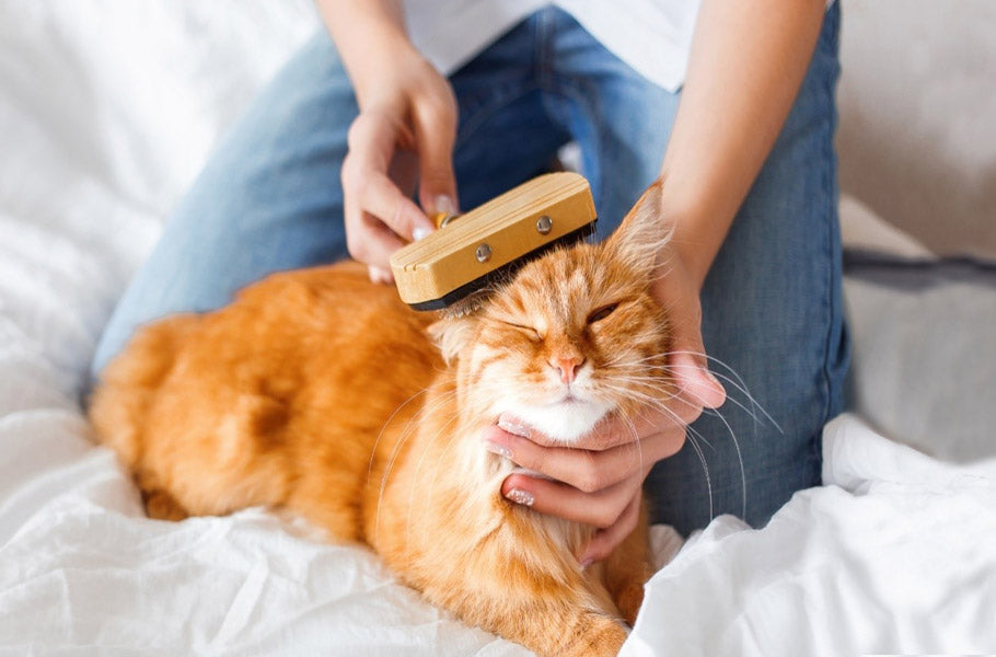 How to reduce shedding and hairballs