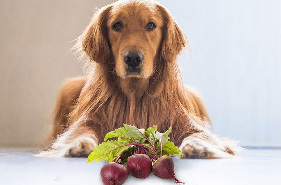 Which vegetables can upset your dog's stomach?
