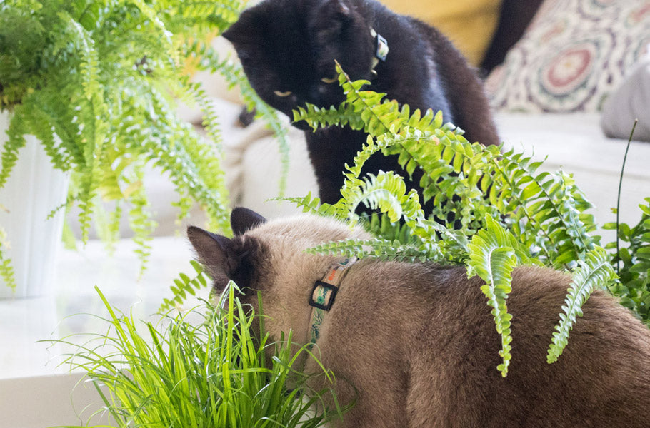 pettsie-8-alternative-medicine-treatments-for-cats