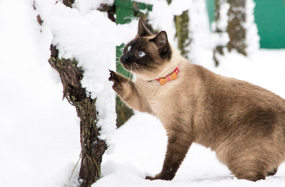 pettsie-5-facts-about-kittens-cats-and-cold-weather