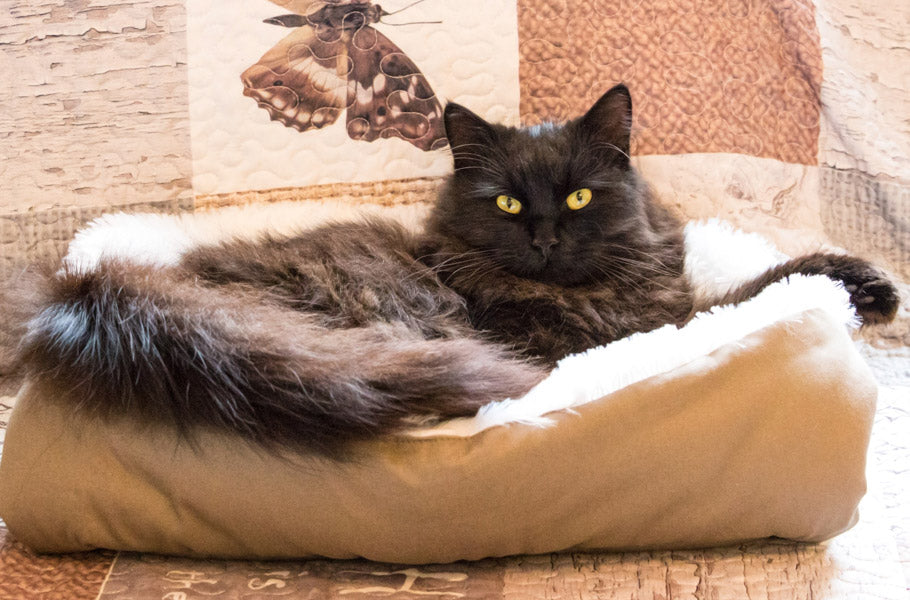 pettsie-best-christmas-gifts-for-pets-breakaway-cat-bed