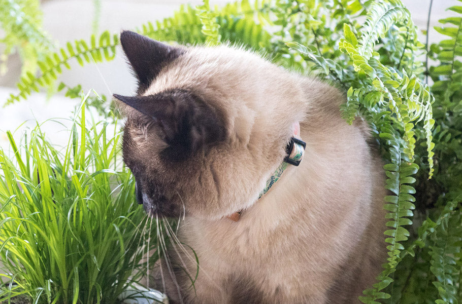 pettsie-best-christmas-gifts-for-pets-breakaway-cat-grass
