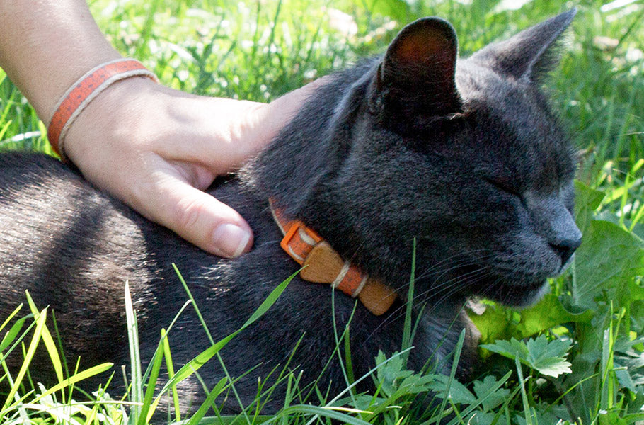 pettsie-easy-treatment-options-for-hairballs-in-cats