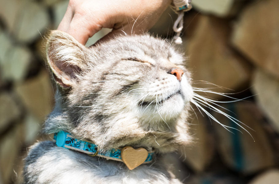 pettsie-easy-ways-to-find-out-if-your-cat-is-happy
