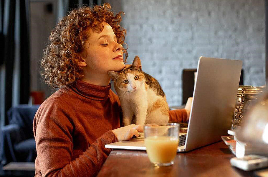 pettsie-how-easy-is-it-to-be-with-your-cat-24-while-working-from-home