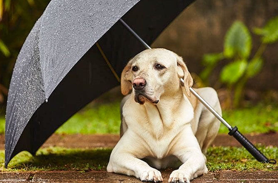 pettsie-how-to-help-your-dog-cope-with-storms-puppy