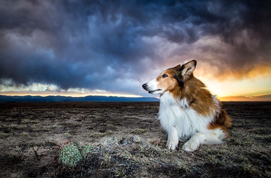 pettsie-how-to-help-your-dog-cope-with-storms