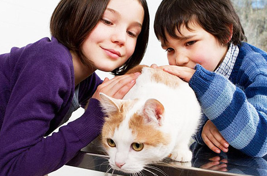 pettsie-how-to-teach-your-kids-to-care-for-their-cat-feline