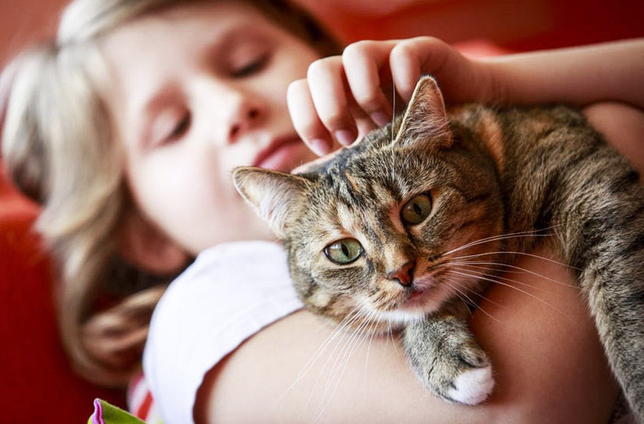 pettsie-how-to-teach-your-kids-to-care-for-their-cat-kitty