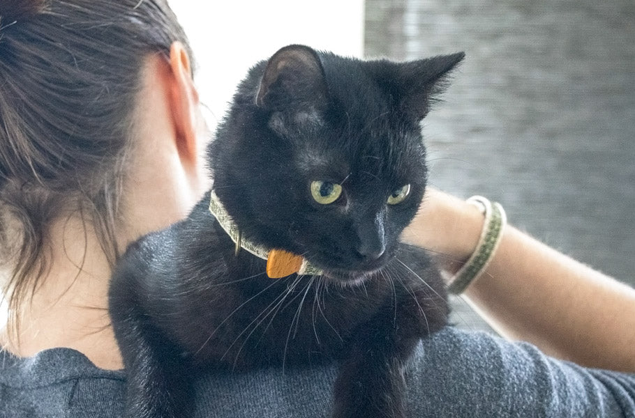 pettsie-impressive-ways-on-how-to-deepen-your-bond-with-your-cat-kitten