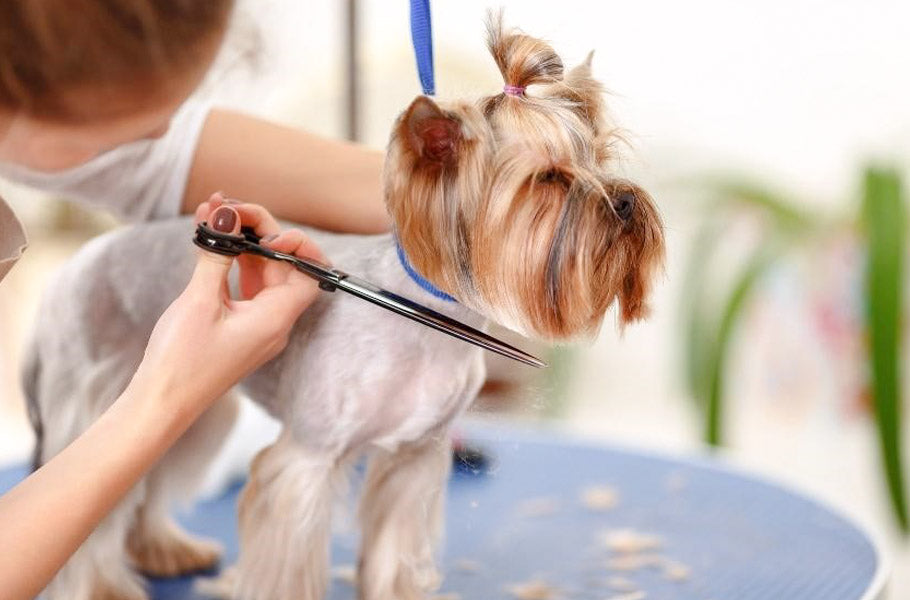 pettsie-reasons-why-shaving-your-dog-is-not-always-the-best-solution