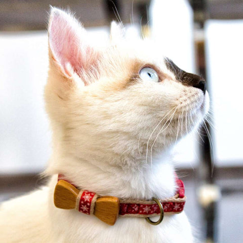 pettsie-red-cat-collar-lili