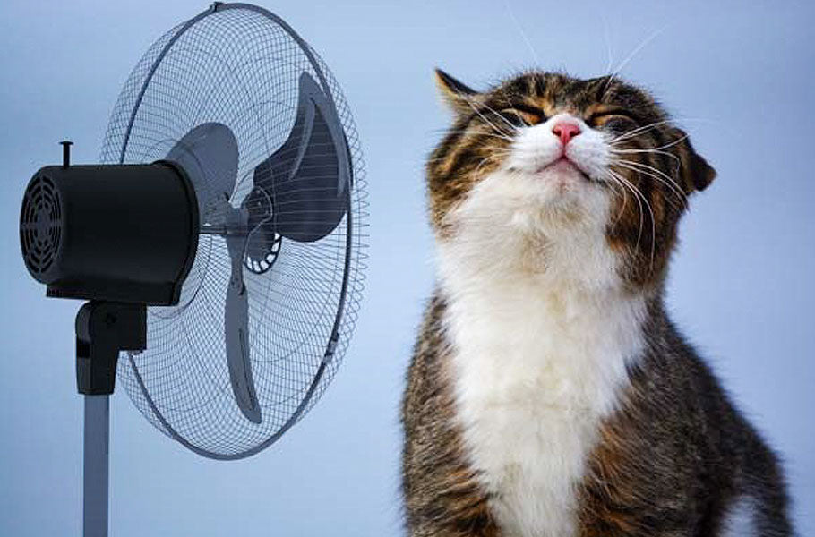 pettsie-simple-tips-to-keep-your-cat-cool-this-summer-kitty
