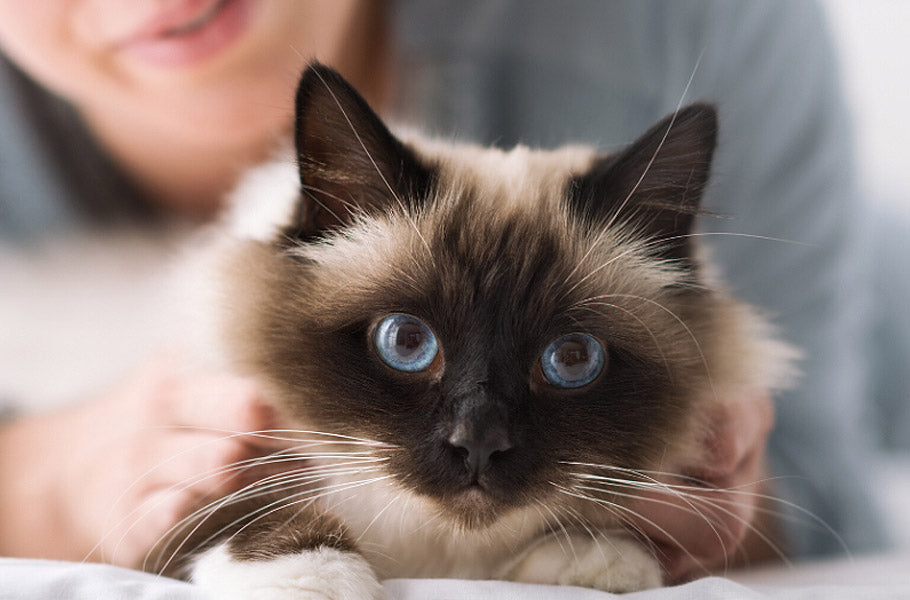 pettsie-simple-ways-to-keep-your-cats-heart-healthy