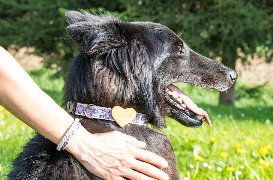 pettsie-simple-ways-to-teach-your-dog-not-to-bark-at-strangers