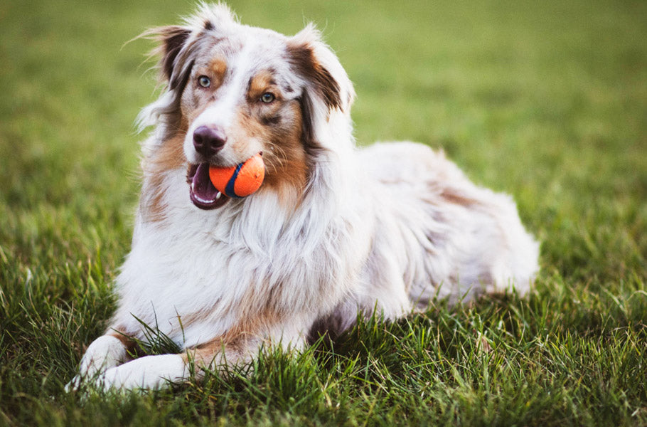 pettsie-simple-ways-to-teach-your-dog-to-play-nice-with-other-dogs-puppy