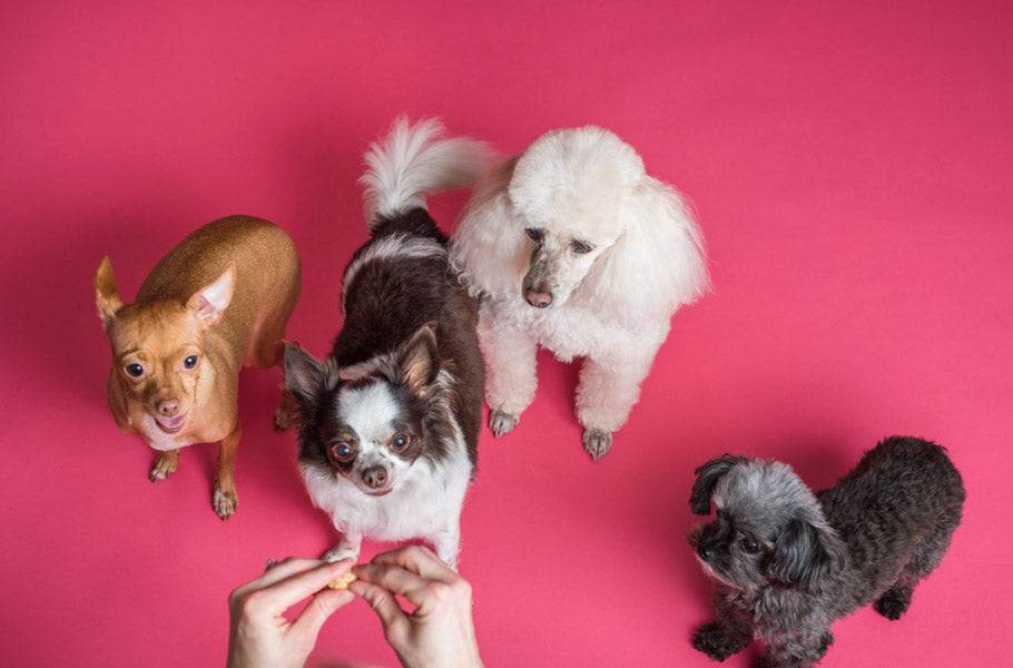 pettsie-simple-ways-to-teach-your-dog-to-play-nice-with-other-dogs-canine