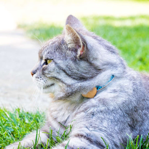 pettsie-heart-cat-collar-turquoise