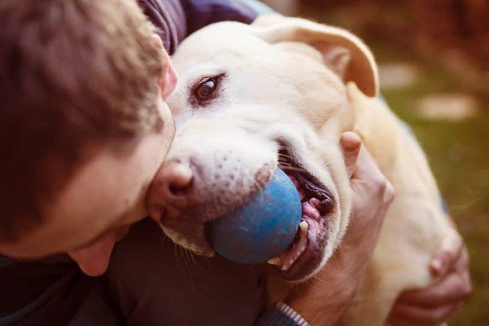 pettsie-what-to-consider-when-adopting-or-fostering-a-pet-during-the-pandemic-dog