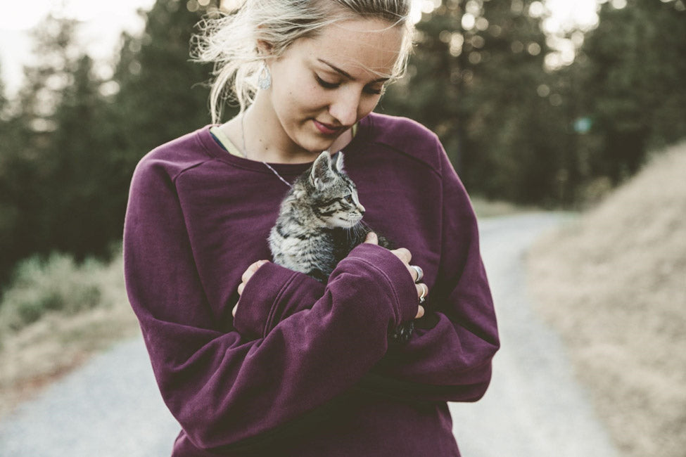 pettsie-what-to-consider-when-adopting-or-fostering-a-pet-during-the-pandemic-cat