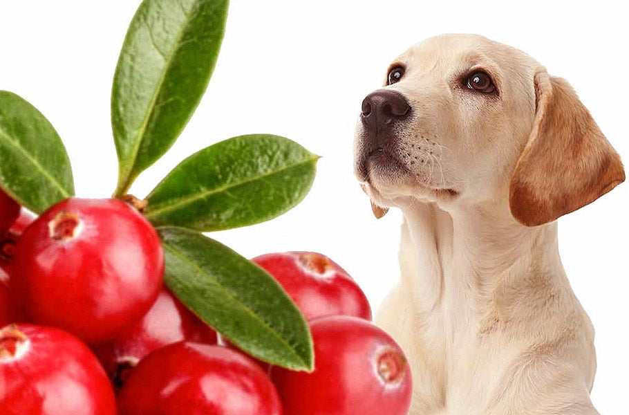 pettsie-which-fruits-are-the-best-for-your-dog-and-which-you-better-avoid-puppy