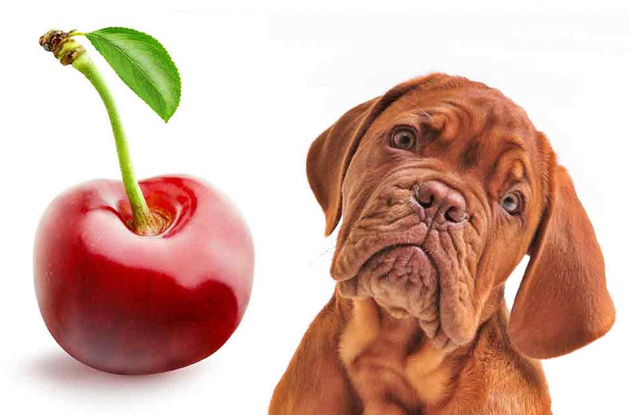 pettsie-which-fruits-are-the-best-for-your-dog-and-which-you-better-avoid-canine